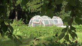 Αγροτικό θερμοκήπιο στο βιο αγρόκτημα χωρών μεταξύ του δέντρου μηλιάς 4K απόθεμα βίντεο
