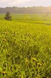 Αγροτικό λιβάδι στον ήλιο βραδιού στο καλοκαίρι στη Φινλανδία Στοκ Εικόνες