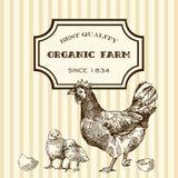 Αγροτικό κοτόπουλο Eco Στοκ Εικόνες