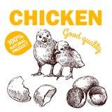 Αγροτικό κοτόπουλο Eco Στοκ φωτογραφίες με δικαίωμα ελεύθερης χρήσης