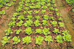 αγροτικό λαχανικό στοκ φωτογραφία