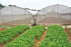 αγροτικό λαχανικό στοκ εικόνα