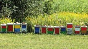 Αγροτικό λιβάδι μελισσών Στοκ φωτογραφίες με δικαίωμα ελεύθερης χρήσης
