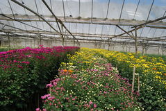 αγροτικό λουλούδι Στοκ Εικόνες