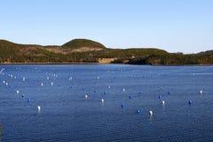 αγροτικό μύδι Στοκ φωτογραφίες με δικαίωμα ελεύθερης χρήσης