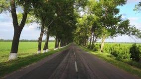 Αγροτικό οδόστρωμα μεταξύ των δέντρων απόθεμα βίντεο