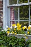 αγροτικό παράθυρο καλλ&iot Στοκ φωτογραφία με δικαίωμα ελεύθερης χρήσης