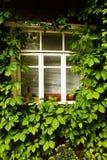 Αγροτικό παράθυρο με τη στενή επάνω φωτογραφία πλαισίων σταφυλιών Στοκ φωτογραφία με δικαίωμα ελεύθερης χρήσης