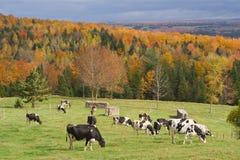 αγροτικό πεδίο Στοκ φωτογραφία με δικαίωμα ελεύθερης χρήσης