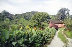 Αγροτικό πράσινο τοπίο, απλό εξοχικό σπίτι Στοκ Εικόνες