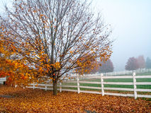 Αγροτικό πρωί φθινοπώρου στοκ εικόνα με δικαίωμα ελεύθερης χρήσης