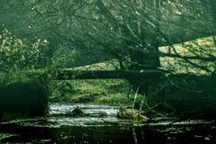 Αγροτικό ρεύμα με τα δέντρα Στοκ εικόνα με δικαίωμα ελεύθερης χρήσης