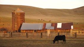 Αγροτικό σιλό σιταποθηκών αγροτικής γεωργίας αγροκτημάτων βοοειδών λόφων ηλιοβασιλέματος απόθεμα βίντεο