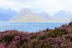 Αγροτικό σκωτσέζικο πανόραμα Στοκ εικόνες με δικαίωμα ελεύθερης χρήσης