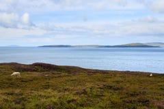 Αγροτικό σκωτσέζικο πανόραμα Στοκ Φωτογραφίες