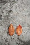 Αγροτικό συγκεκριμένο υπόβαθρο με το ξηρό φύλλο Στοκ φωτογραφία με δικαίωμα ελεύθερης χρήσης