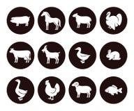 αγροτικό σύνολο ζώων διάνυσμα Στοκ Φωτογραφίες