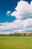 Αγροτικό τομέας επαρχίας ή τοπίο λιβαδιών με την πράσινη χλόη επάνω Στοκ εικόνες με δικαίωμα ελεύθερης χρήσης
