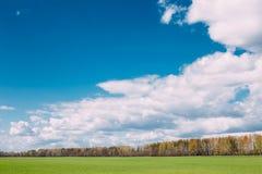 Αγροτικό τομέας επαρχίας ή τοπίο λιβαδιών με την πράσινη χλόη επάνω Στοκ Φωτογραφία