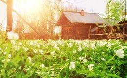 Αγροτικό τοπίο άνοιξη Στοκ εικόνες με δικαίωμα ελεύθερης χρήσης