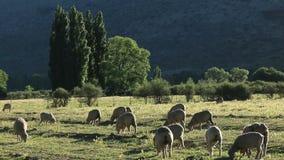 αγροτικό τοπίο αγροτικό φιλμ μικρού μήκους