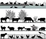 αγροτικό τοπίο ζώων καλοκαίρι πολλών sheeeps Διανυσματική απεικόνιση