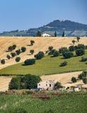 Αγροτικό τοπίο κοντά σε Recanati Ιταλία στοκ εικόνες με δικαίωμα ελεύθερης χρήσης