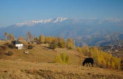 Αγροτικό τοπίο με ένα μαύρο άλογο  στοκ φωτογραφία με δικαίωμα ελεύθερης χρήσης