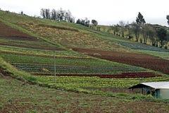 Αγροτικό τοπίο με πολλά χρώματα Στοκ Εικόνες