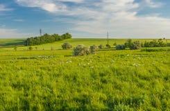 Αγροτικό τοπίο με την εισβολή χήνων στοκ εικόνα
