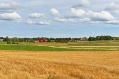 Αγροτικό τοπίο με την κομμένη σίκαλη στοκ φωτογραφία