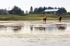 Αγροτικό τοπίο με τον ποταμό και τα άλογα στοκ φωτογραφίες με δικαίωμα ελεύθερης χρήσης