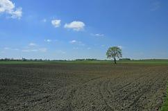 Αγροτικό τοπίο με τους τομείς Στοκ Φωτογραφίες