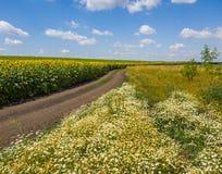 Αγροτικό τοπίο με το δρόμο λουλουδιών και τομέας με τον ηλίανθο, Ρωσία Στοκ Εικόνες