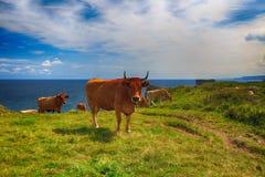 Αγροτικό τοπίο με το κοπάδι αγελάδων Στοκ Εικόνα