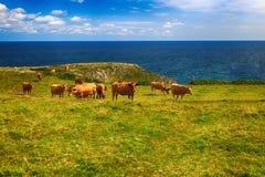 Αγροτικό τοπίο με το κοπάδι αγελάδων Στοκ Φωτογραφία