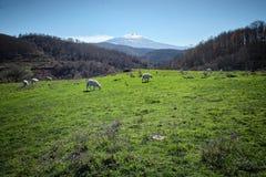 Αγροτικό τοπίο με Etna το ηφαίστειο από την ορεινή περιοχή Argimusco, Sicil στοκ φωτογραφίες με δικαίωμα ελεύθερης χρήσης