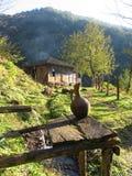 Αγροτικό τοπίο που χαίρεται την ψυχή στοκ φωτογραφία