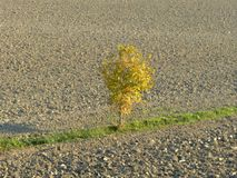 Αγροτικό τοπίο στη Po κοιλάδα - Ιταλία 01 Στοκ εικόνα με δικαίωμα ελεύθερης χρήσης