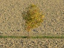Αγροτικό τοπίο στη Po κοιλάδα - Ιταλία Στοκ φωτογραφία με δικαίωμα ελεύθερης χρήσης