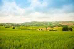 Αγροτικό τοπίο στους θερινούς τομείς στα ιταλικά επαρχία της Ανκόνα στην Ιταλία Στοκ Εικόνες