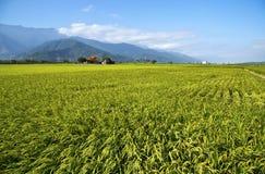 Αγροτικό τοπίο της Ταϊβάν Στοκ φωτογραφίες με δικαίωμα ελεύθερης χρήσης