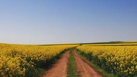 Αγροτικό τρακτέρ σε έναν τομέα συναπόσπορων και έναν μπλε ουρανό, όμορφη ημέρα άνοιξη φιλμ μικρού μήκους