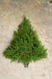 Αγροτικό υπόβαθρο χριστουγεννιάτικων δέντρων κέδρων Στοκ εικόνα με δικαίωμα ελεύθερης χρήσης