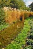 Αγροτικό ύφος κήπων Στοκ φωτογραφία με δικαίωμα ελεύθερης χρήσης