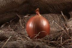 Αγροτικό burlap κρεμμυδιών Στοκ Φωτογραφίες