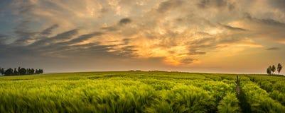 Αγροτικό landsape με το όμορφο ηλιοβασίλεμα - Σαξωνία, Γερμανία Στοκ Φωτογραφία