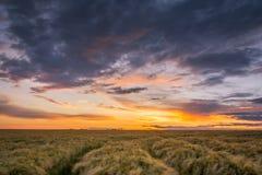 Αγροτικό landsape με το όμορφο ηλιοβασίλεμα - Σαξωνία, Γερμανία Στοκ Εικόνα