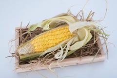αγρο γλυκό επεξεργασίας βιομηχανίας καλαμποκιού στοκ εικόνα