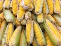 αγρο γλυκό επεξεργασίας βιομηχανίας καλαμποκιού Στοκ φωτογραφία με δικαίωμα ελεύθερης χρήσης